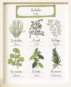 "by Geraldine Adams  Herbs print (Fruits and Vegetables Food series) 8""x10"""