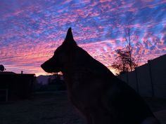 I took a picture of my during the sunset. http://ift.tt/2j44wjW