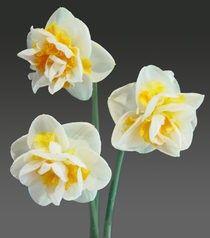 Daffodils http://media-cache4.pinterest.com/upload/136163588703295410_6mSgHPdB_f.jpg delwynr my style