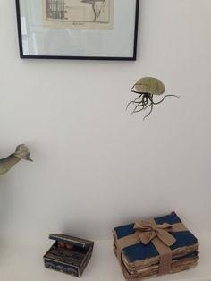 Méduse Oursin Tillandsia de la boutique CM17boutique sur Etsy