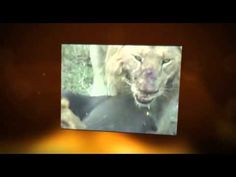 Africam:  Live webcams from three watering holes in Africa.