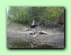 Photo of old tree Nature Forest wall drawings digital