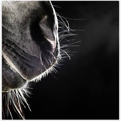 my favorite part of a horse