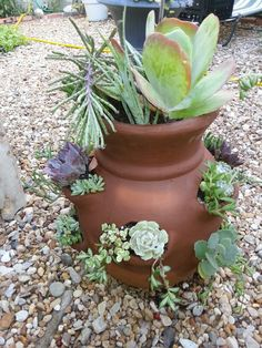Strawberry pot and succulents for my front porch
