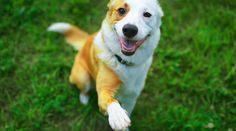 It is National Dog Bite Prevention Week. We encourage pet owners to learn and practice safety measures to ensure both their dogs, and the people around them, stay happy and comfortable! Smartest Dogs, Dog Health Tips, Dog Information, Pet Dogs, Pets, Dog Facts, Cute Funny Animals, Dog Behavior, Training Your Dog