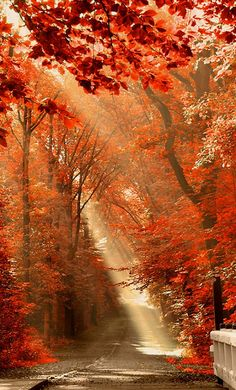 Sunlight bursts through autumn leaves..