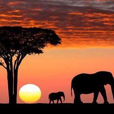 #africaamazing #africabeauty #africaday #africaeverywhere #travel #traveller #travellife #travelmemories #travelmore #travelmate #travelnow #travelogue #diabetic #diabeticfriendly #diabeticforlife #diabetes #type1 #diabeticgirl #diabetichumor #diabetici by diabeticworldtraveler