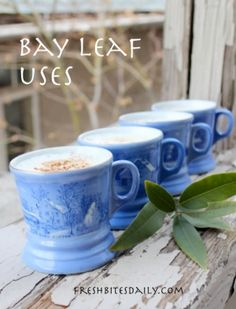 Try some of these bay leaf uses. You'll be amazed. Bay Leaves Uses, Fresh Bay Leaves, Be Natural, Natural Living, Food Hacks, Food Tips, Healing Herbs, Growing Herbs, New Flavour
