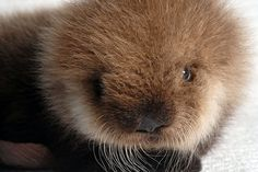 aww Otter!