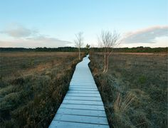 Crikey it was cold this morning! The good thing about the weather is the water in the wooden boardwalk turned into frost which made it look white. Who'd have thought this was a heath in Surrey – could have been Scotland! Maybe that's why they filmed the James Bond movie 'Skyfall' just around the corner...
