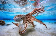 Underwater Photographer Contest 2017 Best Shots – Fubiz Media