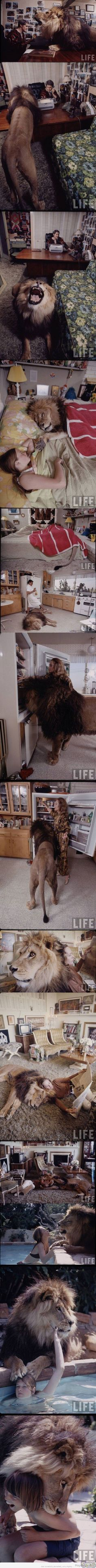 Living with #Togar the #lion ... www.justdwl.net