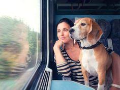 Viajar en tren con animales | Blog Truecalia https://www.truecalia.com/blog/viajar-tren-animales/