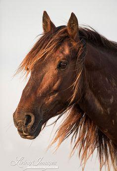 Waverunner at Sunset - Fine Art Wild Horse Photograph - Wild Horse