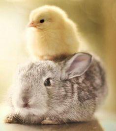 Baby animals , Cute baby animals