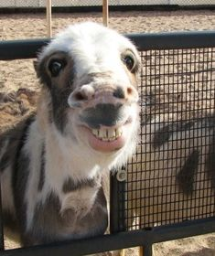 11 + 2 Goofy Animal Pics That I Promise Will Make You Smile