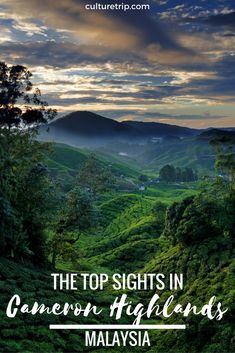 The Top Sights In Cameron Highlands, Malaysia.