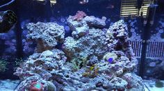 29 Gallon Aquarium Hood