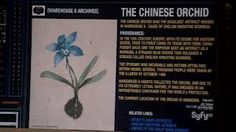 warehouse 13 artifacts Files | Image - Chinese orchid.jpg - Warehouse 13 Wiki