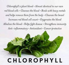 If it's green it contains chlorophyll. With leafy greens you want them as fresh as possible. Green herbs like parsley and cilantro are included in this also. Other sources are wheat and barley grass that you can easily grow in your house and chlorella or spirulina.