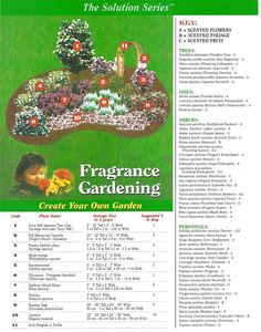 Fragrance Gardening Plan; A mixture of scented Flowers, Foliage and ...
