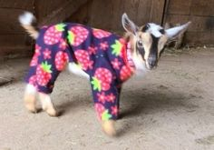 It's Official—There's Nothing Cuter Than These Baby Goats in Pajamas