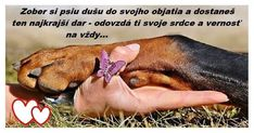 Picsart, Psy, Dogs, Animals, Animal Pictures, So Done, Animales, Animaux, Pet Dogs