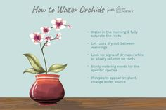 Learn how to water orchids correctly with these tips on frequency, external factors that affect watering, plus common mistakes to avoid. Orchids In Water, Dendrobium Orchids, Blue Orchids, Water Plants, Potted Plants, Indoor Plants, Indoor Orchid Care, Indoor Orchids, Orchid Plants