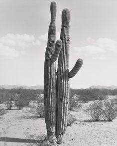 Cactus love.
