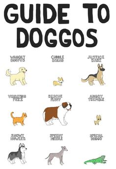 A quick guide to puppers and doggos