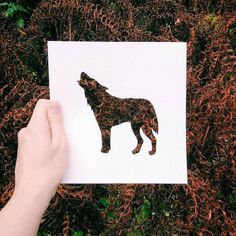 Cutout Paper Animals Silhouettes Colored by Natural Landscapes