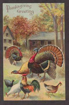 Vintage Postcard Thanksgiving Turkeys and Chickens on Farm Embossed Unused Happy Thanksgiving Turkey, Thanksgiving Pictures, Happy Turkey Day, Thanksgiving Blessings, Thanksgiving Greetings, Vintage Thanksgiving, Vintage Fall, Thanksgiving Crafts, Vintage Holiday