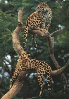 Mammals of the Rainforest