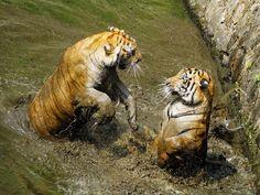 Tough Negotiation Photo by Aprison Aprison — National Geographic Your Shot