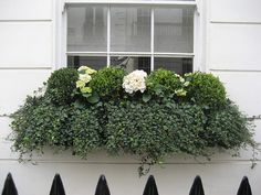 Window Box by Howard Sanderson Gardening, via Flickr