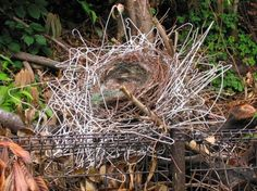 Crafty Crows Build Nests Out of Stolen Coat Hangers http://beautifuldecay.com/2014/05/09/crafty-crows-build-nests-stolen-coat-hangers/