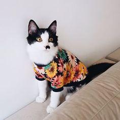 42b84af29eeba 70 melhores imagens de gatinhos   Fluffy animals, Fluffy kittens e ...
