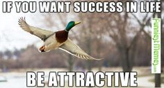 Funniest Memes - [If You Want Success In Life...]