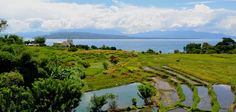 Rice (padi) field at Toba lake side, Balige, Indonesia. There is small church on the edge.