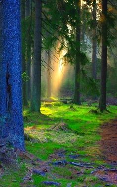 Light in the forest Amazing World beautiful amazing