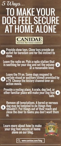 Ways To Make Your Dog Feel Secure At Home Alone. Advice for dog owners to help prevent separation anxiety within dogs when left home alone.