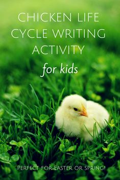 "My kids loved creating their ""My Life as a Chicken"" journal entries!  This is such a fun, creative activity for Easter time or teaching about the chicken life cycle.  Read how to download the free prompts/printable journals here:  http://learningattheprimarypond.com/blog/chickenlifecyclewritingproject/"