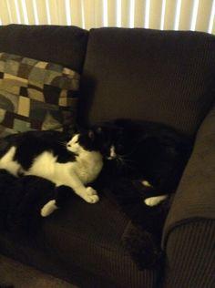 Houdini & Baby Kitty