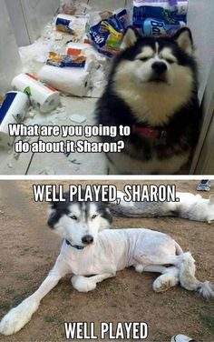 Funny Dog Pictures Of The Day - 35 Pics