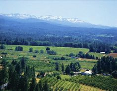 GoAltaCA | El Dorado Wine Country in the Sierra foothills, ranging from 1200 to 3600 ft.
