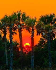 beautiful sunset through the palm trees Beautiful World, Beautiful Places, Amazing Sunsets, Beautiful Sunrise, Jolie Photo, Ciel, Pretty Pictures, Wonders Of The World, Scenery