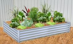 Rectangular Raised Garden Bed x x Brisbane, Melbourne, Bloom Where You Are Planted, Raised Garden Beds, Beautiful Space, Home Deco, Tulips, Diys, Warehouse