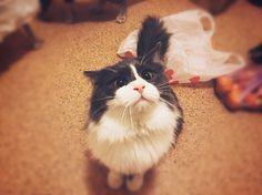 cat named Tishe (Hush)  Кот по имени Тише