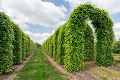 #parkertech #kerteszet #faiskola #debrecen #gardenart #gardening #nursery #horticulture #park #garden #technology #nature #shaped #plants Park, Vineyard, Outdoor Structures, Gardening, Plants, Collection, Vine Yard, Lawn And Garden, Parks