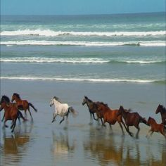 Discover & share this Horses GIF with everyone you know. GIPHY is how you search, share, discover, and create GIFs. Clydesdale, Running On The Beach, Running Horses, Animation, Gif Animé, Wild Horses, Wild Horse Videos, Nature Animals, Photos